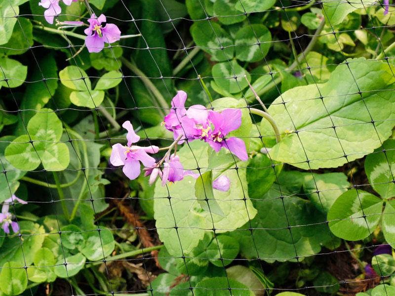 植物保护网