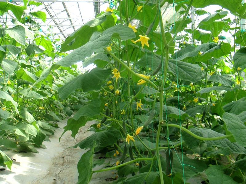 植物支架网