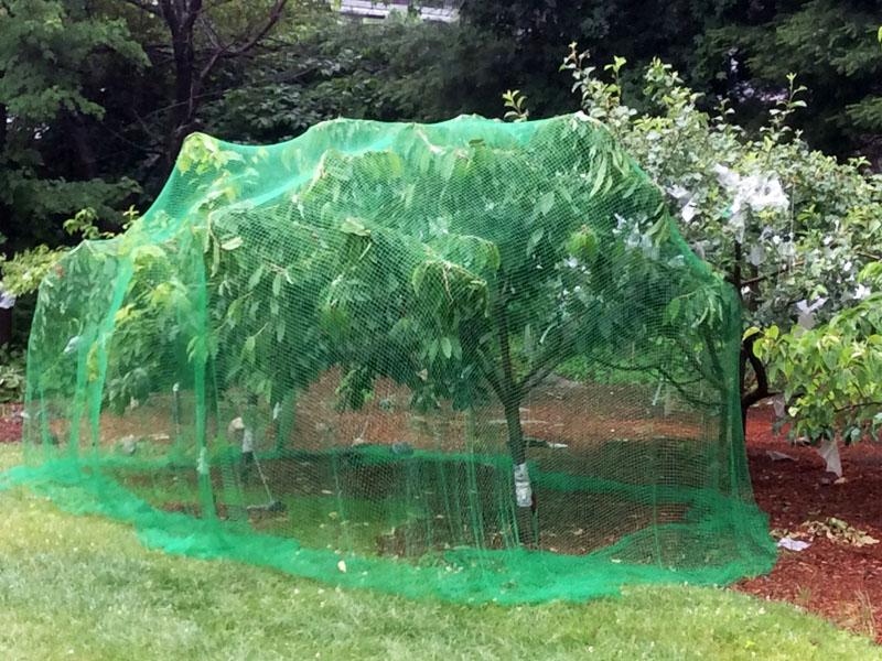 树木保护网